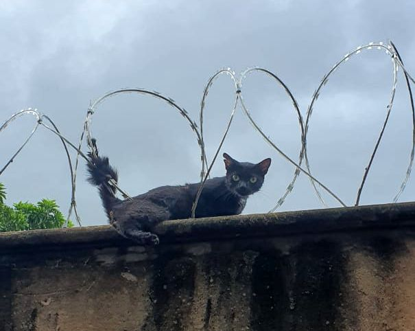 Animal ficou preso na concertina (Foto: Bombeiros)