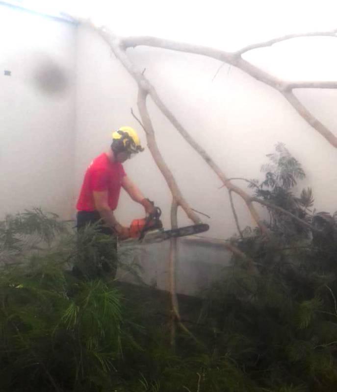 Árvore caiu sobre o muro da residência | Foto: Bombeiros/Divulgação