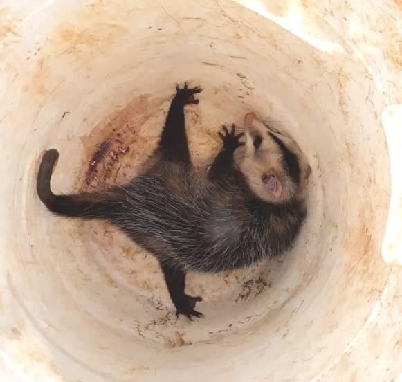 Animal foi solto em uma reserva natural | Foto: Bombeiros/Divulgação