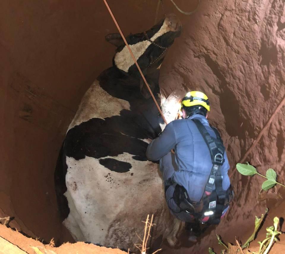 Momento do resgate do animal | Foto: Bombeiros/Divulgação