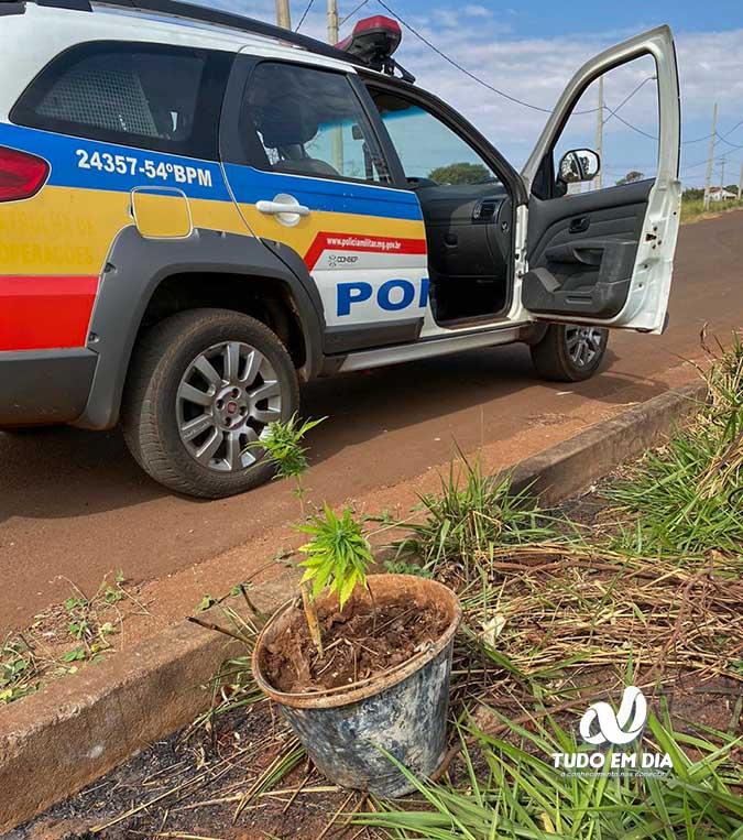 Pé de maconha estava em um mangueiral às margens do córrego Olaria | Foto: PMMG/divulgação