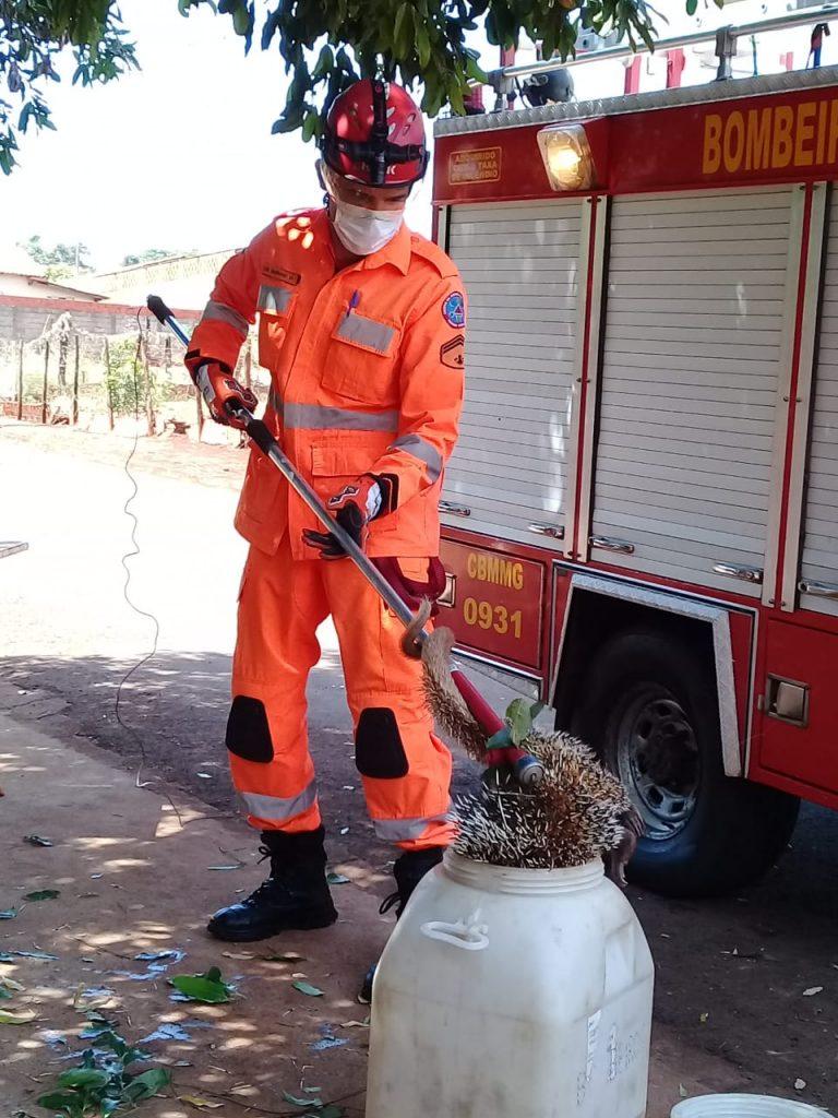 Bombeiro resgatou o animal silvestre | Foto: Bombeiros/Divulgação