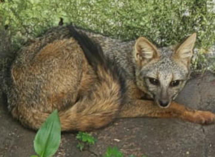 Animal foi capturado em uma residência em Ituiutaba | Foto: Bombeiros/Divulgação