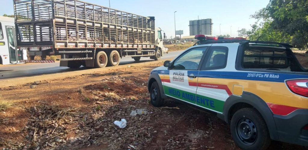 Foto: Polícia Militar de Meio Ambiente/Divulgação