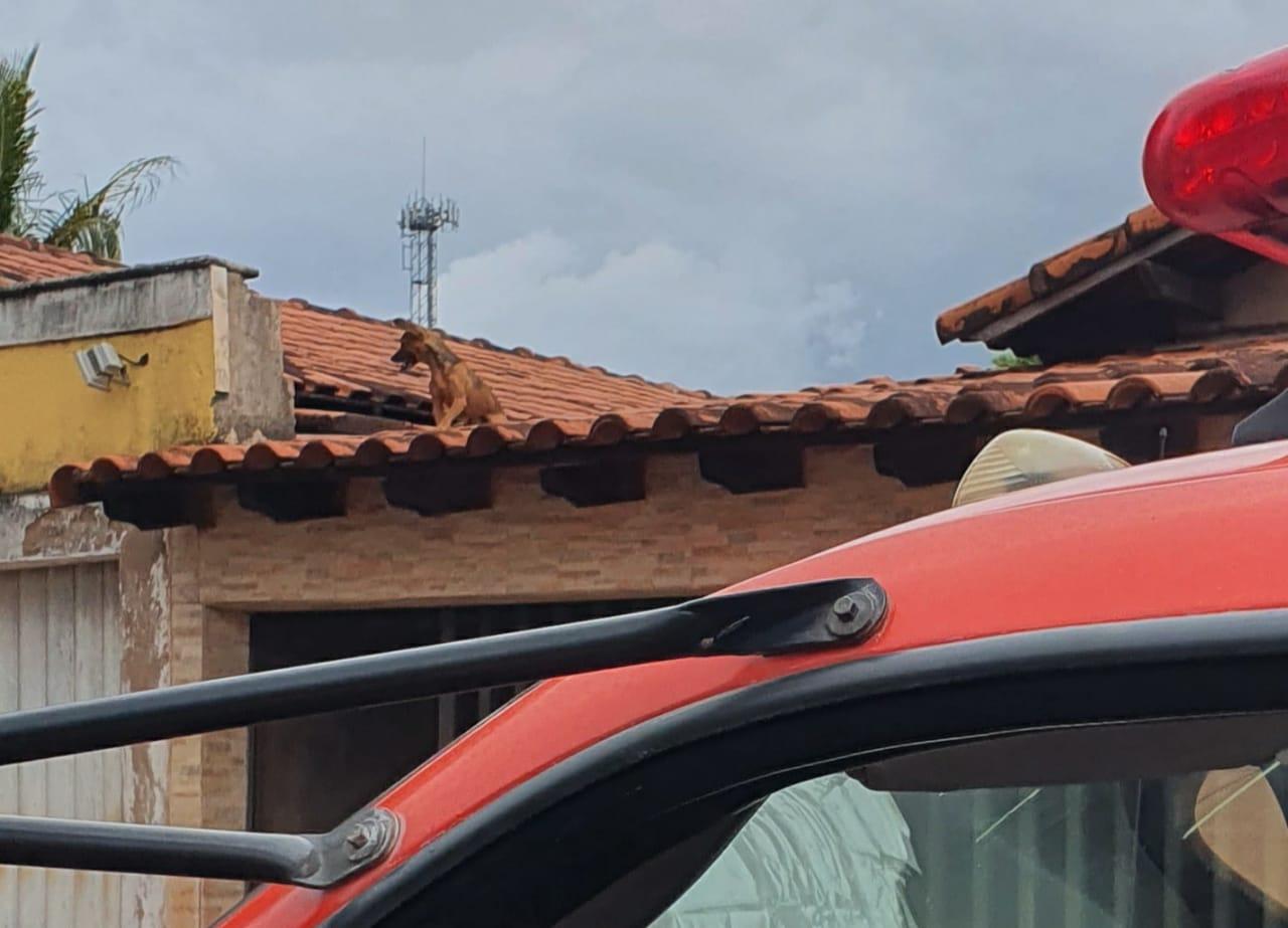 Animal ficou subiu no telhado e não conseguia descer | Foto: Bombeiros/Divulgação