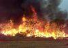 Incêndio destruiu grande área de vegetação | Foto: Bombeiros/Divulgação